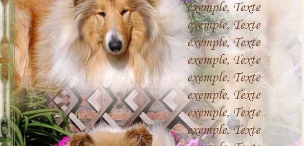 Colley Incredimail & Papier A4 h l & outlook & enveloppe & 2 cartes A5 & signets 3 langues     chien_colley_onderwerp_leddy92