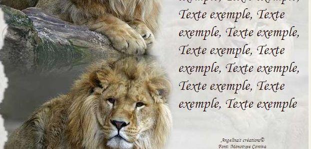 Lion Incredimail & Papier A4 h l & outlook & enveloppe & 2 cartes A5 & signets 3 langues         ans_lion_zoo_antwerp_1280_00