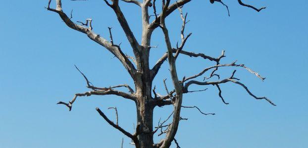 Les arbres, si divers...