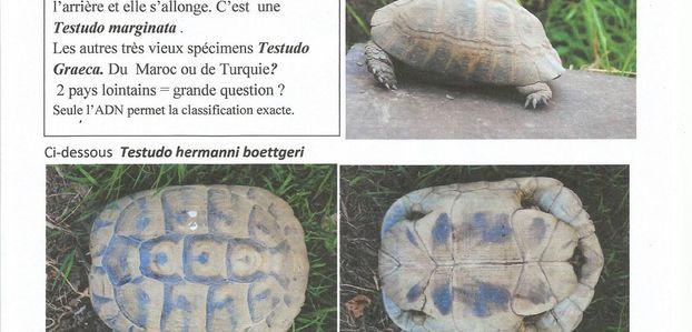 IDENTIFICATION de TORTUES TERRESTRES méditerranéenne