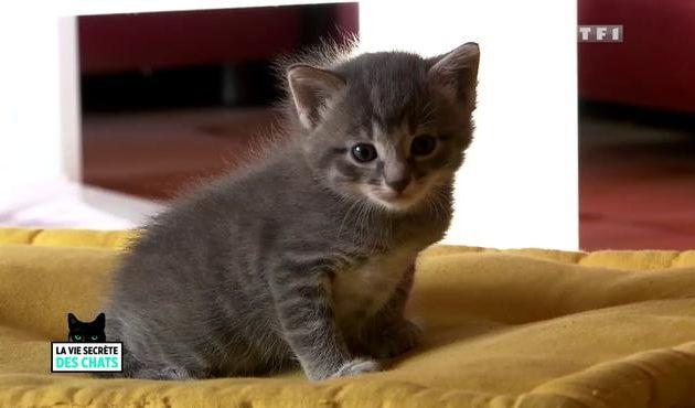 Documentaire La vie secrète des chats 🐱