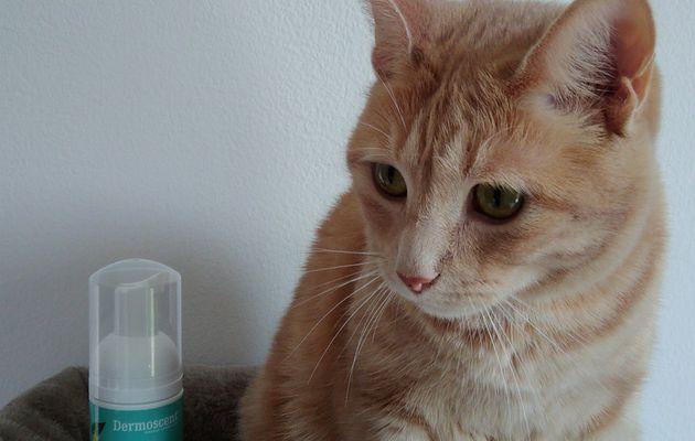 Oliver a testé l'Essential Mousse Dermoscent