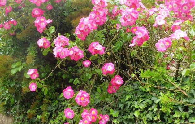 Marche fleurie en direction du Chenetel