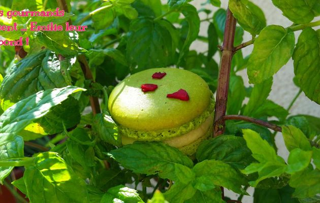 "Macarons ""Miléna "" (menthe fraiche/framboises)"