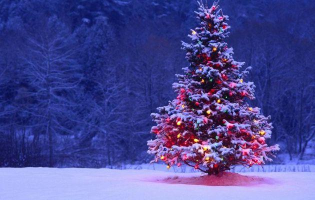 Les sapins de Noël de l'ALVP Basket
