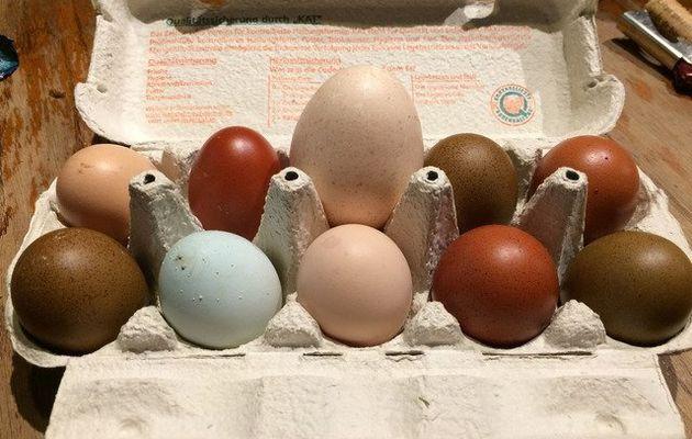 Les œufs en question