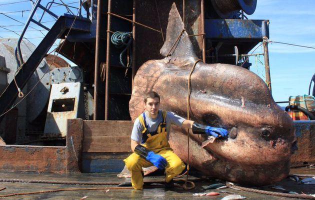 Un pécheur russe dévoile les incroyables créatures marines qu'il remonte dans ses filets