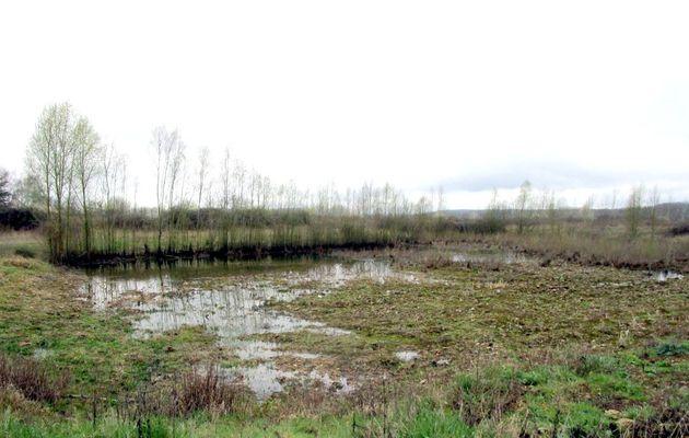 Couture-sur-Loir : sortie à la découverte des insectes