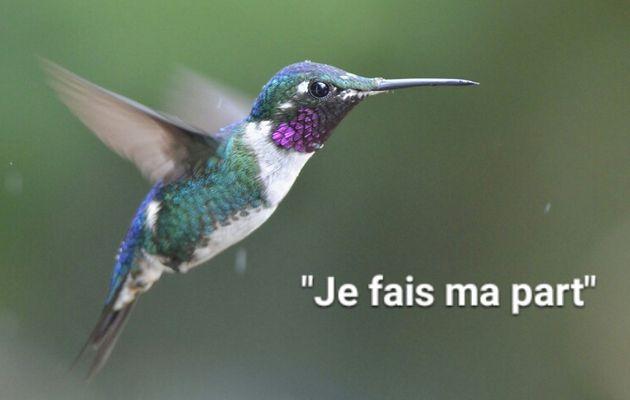 Celui qui voulait être un petit colibri au Canada