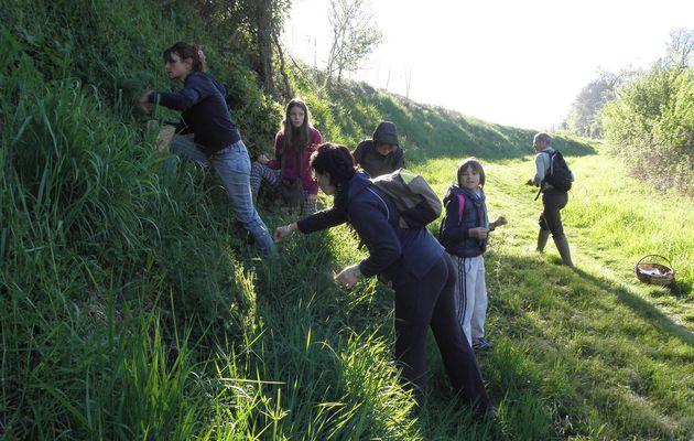 Compte-rendu de la Journée sur les plantes sauvages comestibles du 9 Avril 2017 à Moissac