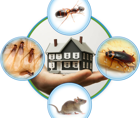 Remove pests from the residence with effective pest control solution