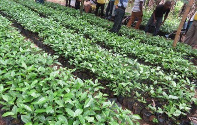 Transfert de technologies aux agriculteurs, une deuxième phase est sollicitée