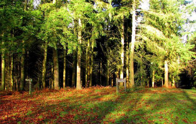 en forêt de Retz_10_12_2012_Longpont_carrefour des Princesses_AR.