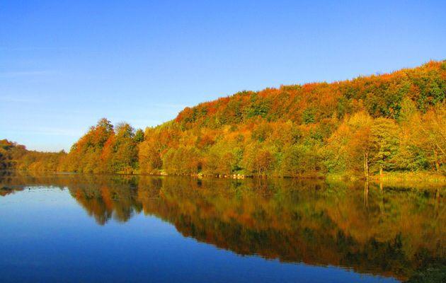 en forêt de Retz_9_11_2012_Longpont_étangs de la Ramée_AR.