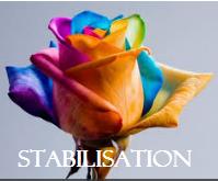 SEMAINE DE STABILISATION DU 03/06/17 AU 09/06/17