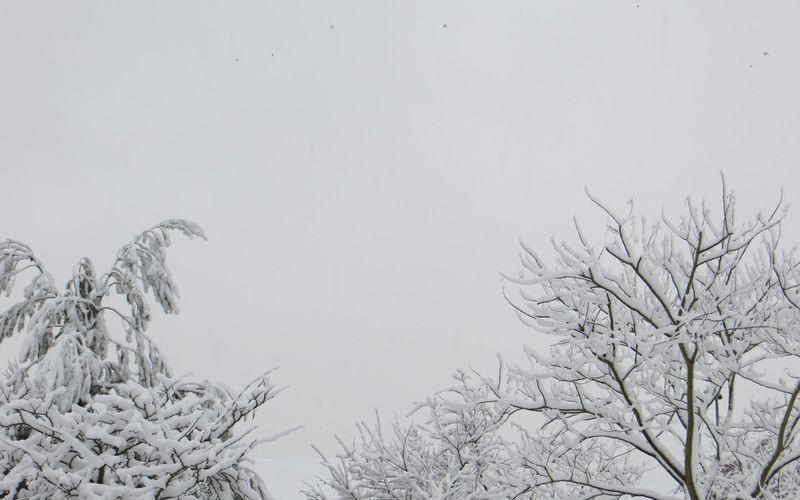 Dictons de janvier