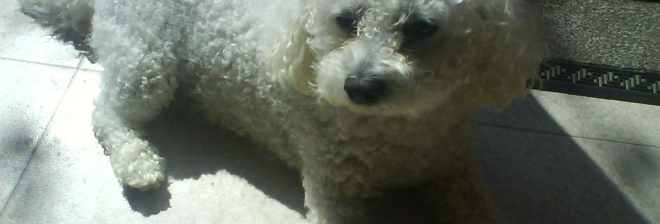 Notre Adorable Snoopy