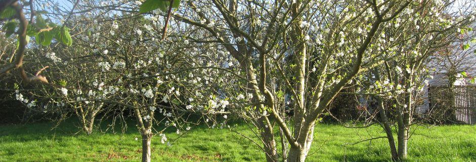Le printemps est là et bien installé !