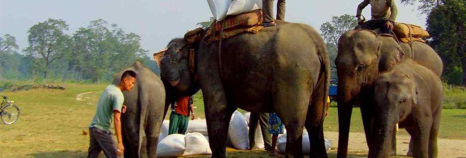 LE CHITWAN DANS LE TÉRAÏ (Népal)