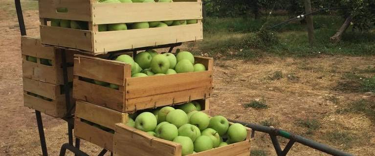 Cueillez vos pommes! Domaine d'ASTROS à VIDAUBAN