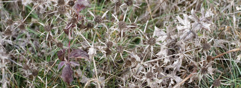334 - Séjour campagnard : Lichen, Soucoupe... et sècheresse ! : 03 & 04/11/17