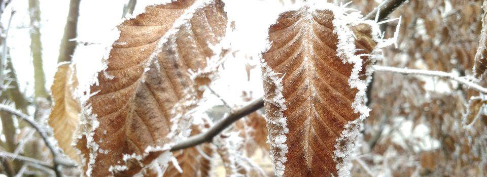 La photo du 08/03/17 : feuilles gelée